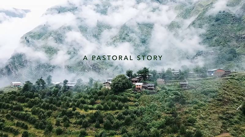 A Pastoral Story