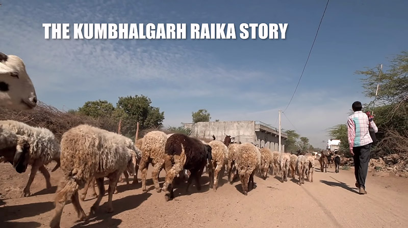 The Kumbhalgarh Raika Story